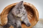 قطط في جده ب سعر رمزي