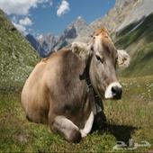fresh cow s milk