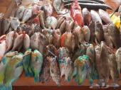 بيع اسماك وجمبري وثمار بحريه طازجة إلى بيتك