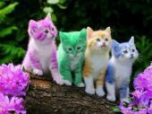 فندقة ورعاية القطط
