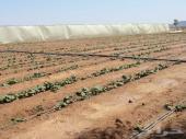 فرصه للبيع مزرعه مساحة 500 الف متر بصك