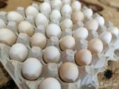 بيض بلدي مائده طازج ( يوجد توصيل)