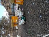 دجاج ابيض بياض