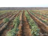 مزرعه لبيع المساحه 132889