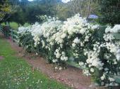 بذور أشجار برية وزهور ونسبة الإنبات كبيرة