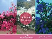 بذور نباتات برية وزهور جميلة وعرض خاص للكميات