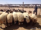 26 كلش خروف طيبات اكثرهن جبر ومغلق
