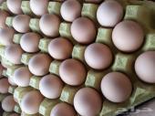 بيض بلدي طازج يوميا