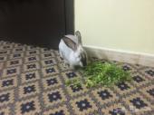 أرانب بلدية