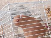 حمام في الرياض