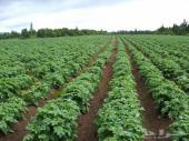 مطلوب مزرعة للبيع