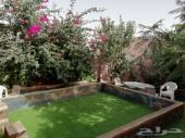 استراحة للايجار مسبح ملعب صابوني شباب وعوايل