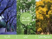 اجمل ثلاثة اشجار ظل وزينة شحن مجانا