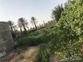 مزرعة للبيع في محافظة العقيق _الباحة