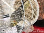 3 طيور كروان