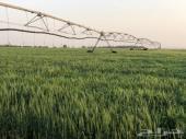 مزرعة للبيع مرخصة اعلاف (برسيم ) في القرنة
