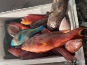 مطعم سمكة  توصيل لجميع المناطق مكة