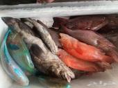 مطعم سمكة بالكعكية