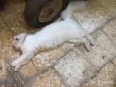 قطط بساس هرار قطاوات بسوس