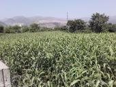 للبيع أرضين زراعية في اليمن - إب السحول