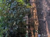 شتلات وأشجار بأسعار رخيصه للكميات