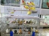 طيور زينة وببغاوات وأسماك الزينة نوادر
