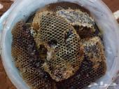 عسل للبيع جوده وذوق