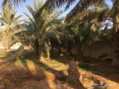 حوش ب 6000 سنوي في بنبان صغير ومزرعة للايجار