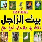 زغاليل وطيور بيت الزاجل