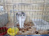 فندقة قطط في المدينة المنورة