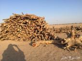 حطب سمر عرن و عيدان مبرومه