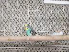 طيور حب منتجة