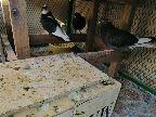 حمام قطايف وعشه 15 جوز نصهم تحته بيض