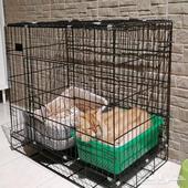 خدمات وفندقة وعناية للقطط
