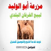 خرفان بلدي ع الشرط