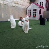 ملجأ القطط في الرياض