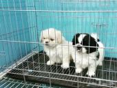 كلاب  ميني للبيع بالرياض