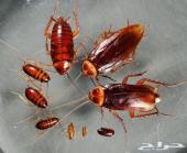 شركة مكافحة الصراصير مكافحة النمل الأبيض