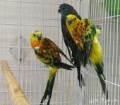مجموعة طيور