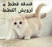 فندقة قطط بالخبر