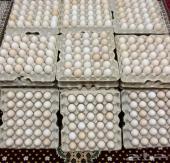 بيض بلدي مائده انتاج يومي طازج( يوجدتوصيل)