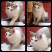 قطة لعوبه للتنازل