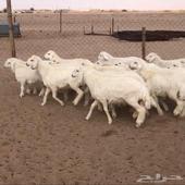 الشرقيه -الجبيل البلد