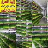 غرف استنبات الشعير الاخضر للحلال فى الامارات