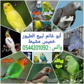 طيور زينة منوعة للبيع أكثر من عشرة انواع