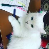 قطه ام مع صغارها