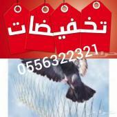 شركة مكافحة حمام طارد مانع الطيور تركيب اشواك