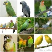 يتوفر جميع مستلزمات طيور الزينة