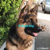 كلاب الجيرمن شيبرد - وعلامات نقاء السلالة