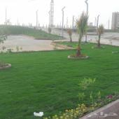 ابو بسام لتنسيق الحدائق